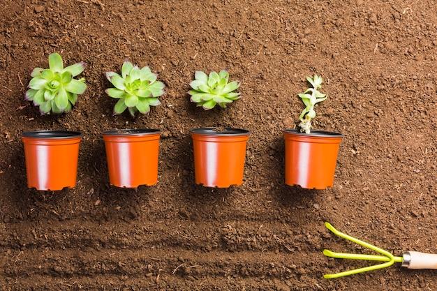 Vue de dessus des plantes et des pots sur le sol
