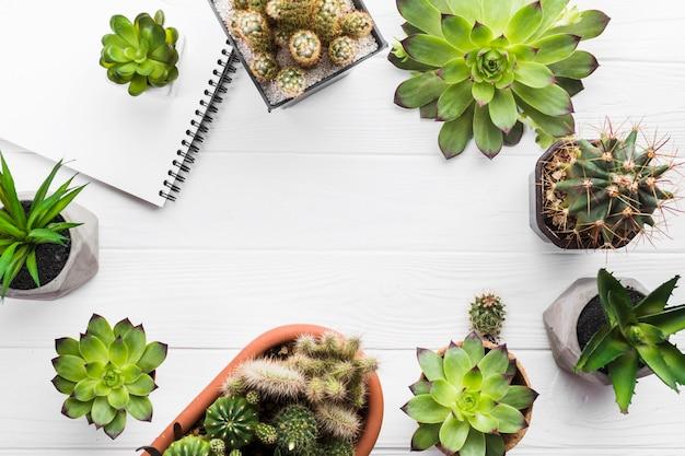 Vue de dessus des plantes sur une surface en bois