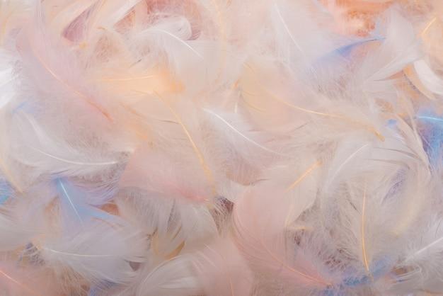 Vue de dessus de plumes colorées.