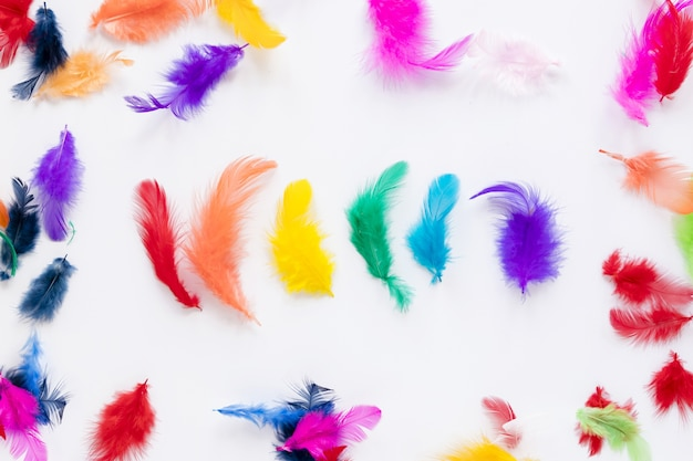 Vue de dessus des plumes colorées
