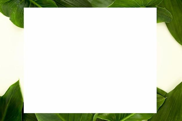 Vue de dessus de plusieurs feuilles avec espace copie