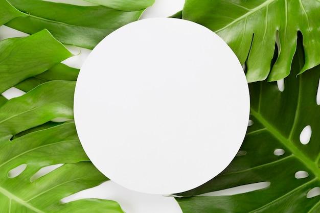 Vue de dessus de plusieurs feuilles de monstera avec espace copie