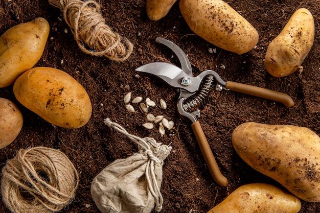 Vue de dessus des pommes de terre avec des ciseaux et de la ficelle
