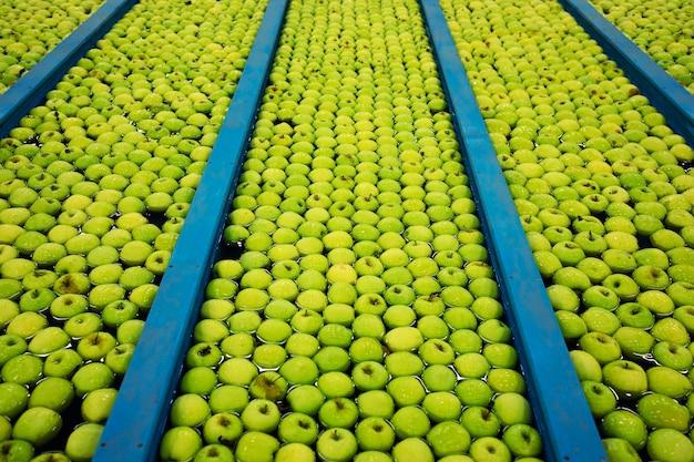 Vue de dessus des pommes vertes flottant dans l'eau dans l'usine de transformation de fruits.