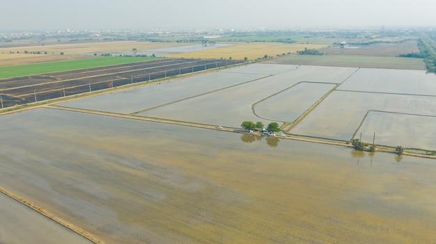 Vue de dessus sur le riz des champs