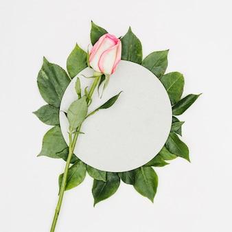 Vue de dessus rose avec cadre de feuilles