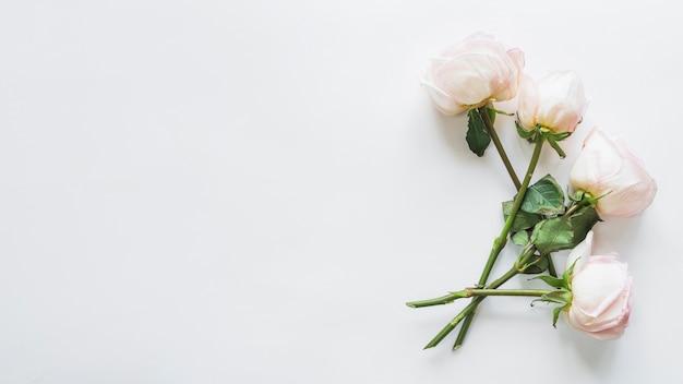 Vue de dessus des roses blanches
