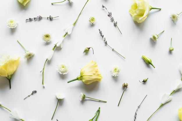 Vue de dessus de roses jaunes