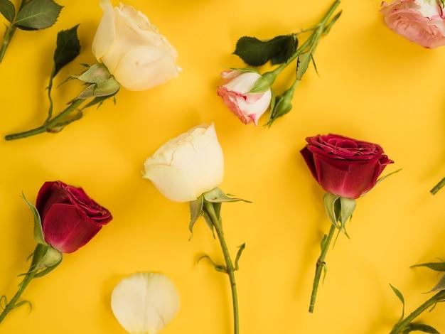 Vue de dessus de roses mignonnes