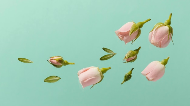 Vue de dessus des roses de printemps rose