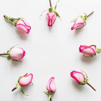 Vue de dessus de roses roses