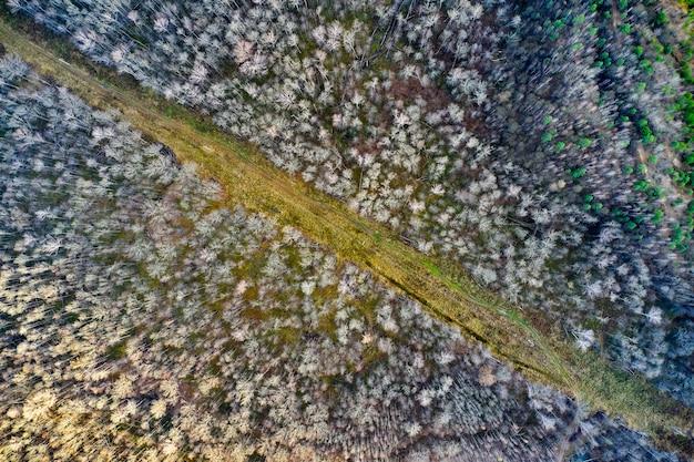 Vue de dessus de la route forestière arial drone abattu d'arbres forestiers.