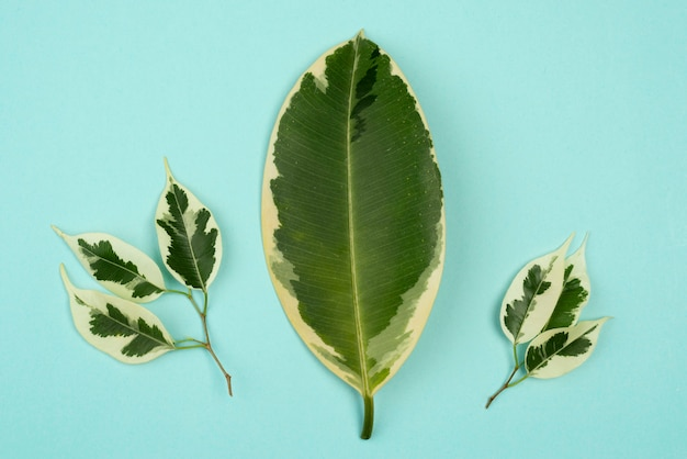 Vue de dessus de la sélection de feuilles de plantes