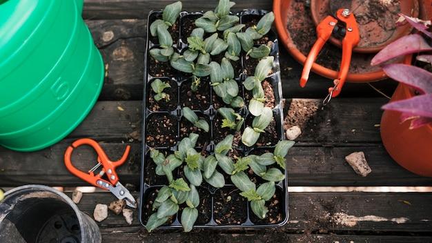 Une vue de dessus des semis dans la caisse avec des outils et un pot sur une plante en bois