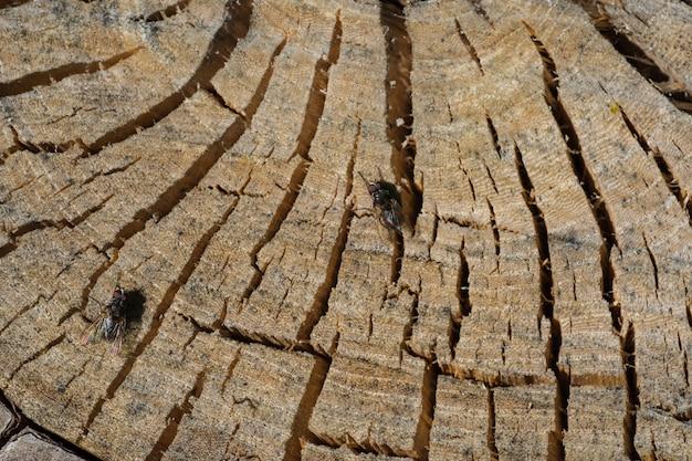 Vue de dessus d'une souche naturelle en bois