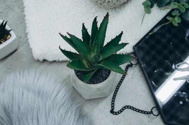 Vue de dessus de succulentes à la maison
