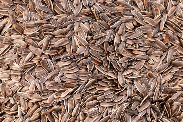 Vue de dessus de la surface des graines de tournesol