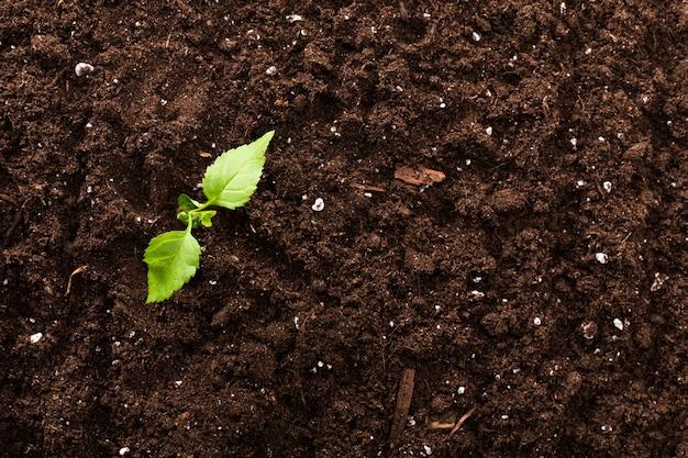 Vue de dessus de la surface de la plante verte semis fond texturé