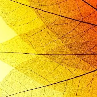 Vue de dessus de la texture de la feuille transparente