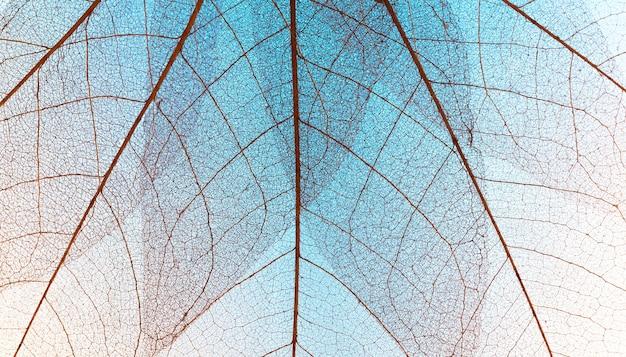 Vue de dessus de la texture des feuilles transparentes colorées