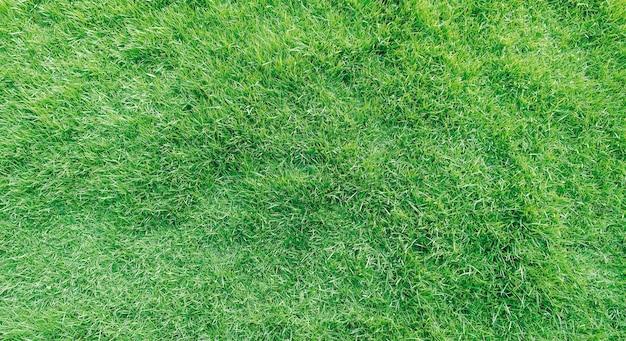 Vue de dessus de texture d'herbe