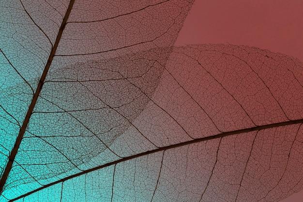 Vue de dessus de la texture de la lamina de feuilles translucides colorées