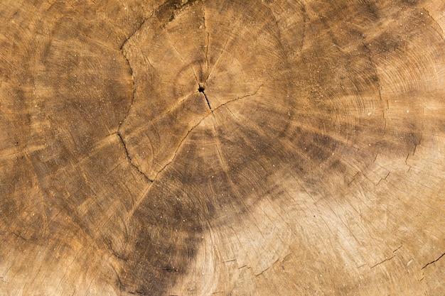 Vue de dessus d'une texture de souche d'arbre