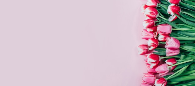 Vue de dessus des tulipes roses sur fond rose avec espace libre