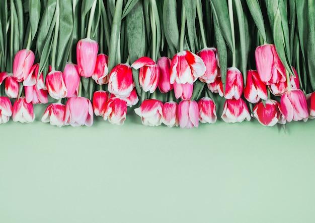 Vue de dessus des tulipes roses sur fond vert avec espace libre