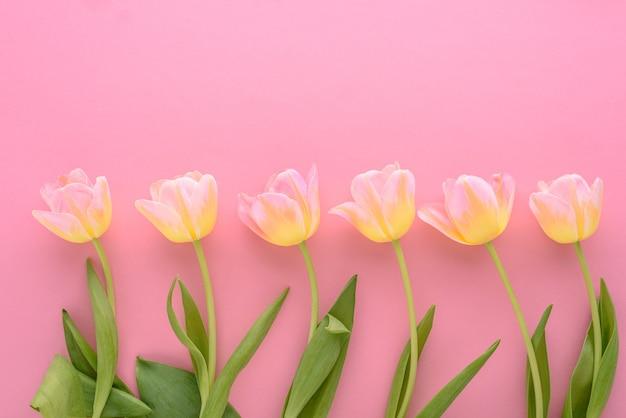 Vue de dessus tulipes roses en ligne sur fond rose, concept d'arrangement floral
