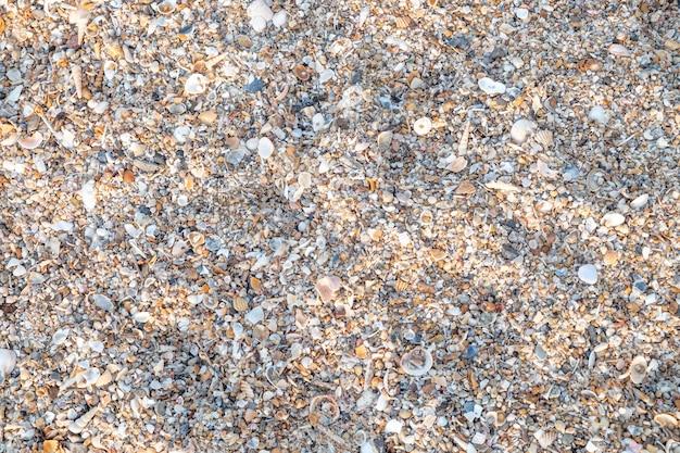 Vue de dessus variété de coquillages de la plage