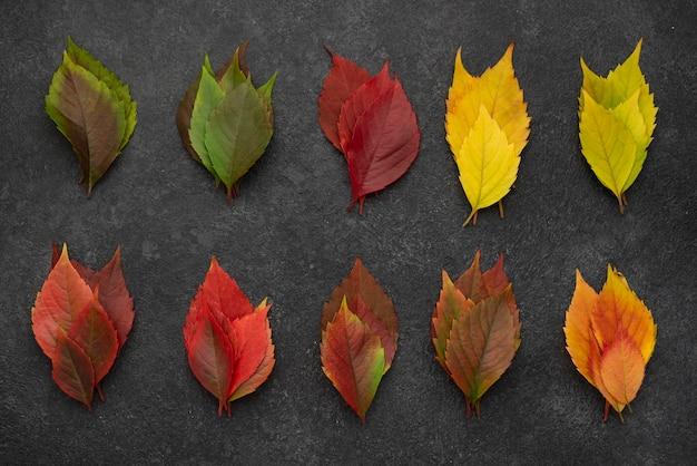 Vue de dessus de la variété de feuilles d'automne