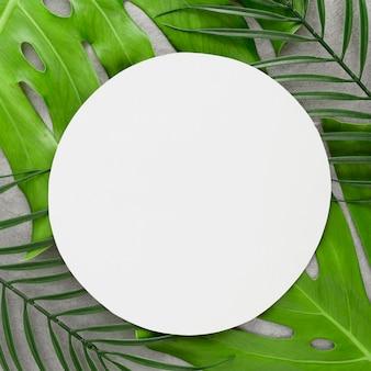 Vue de dessus de la variété de feuilles avec espace copie
