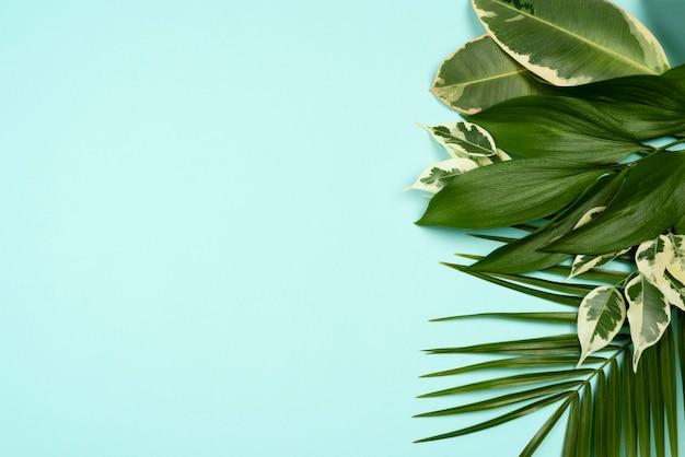 Vue de dessus de la variété de feuilles de plantes