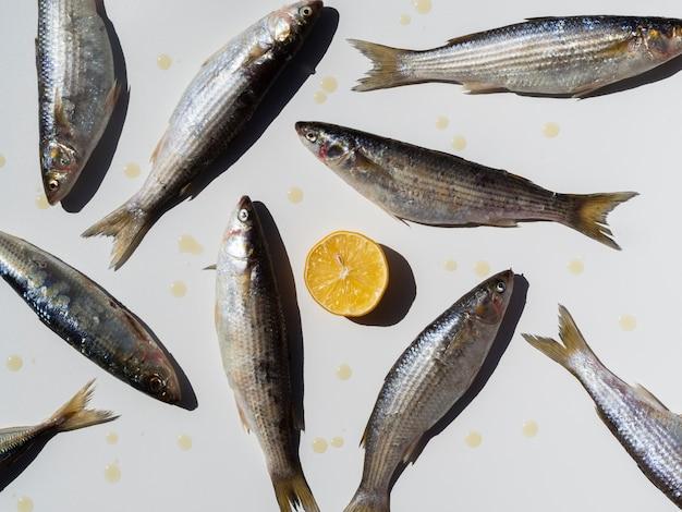Vue de dessus variété de poissons et un citron
