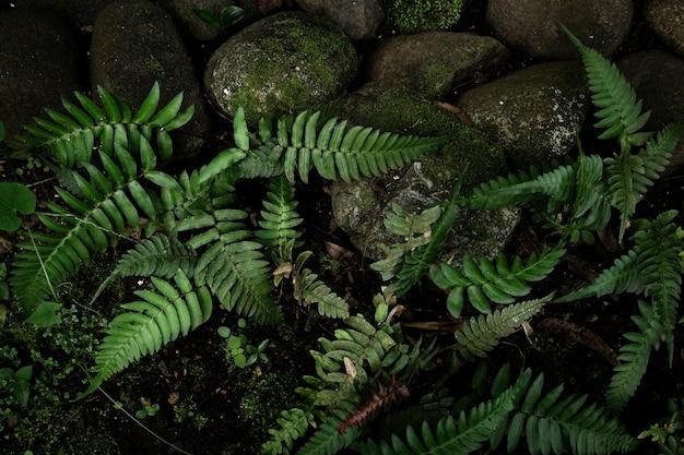 Vue de dessus de la végétation de la jungle tropicale