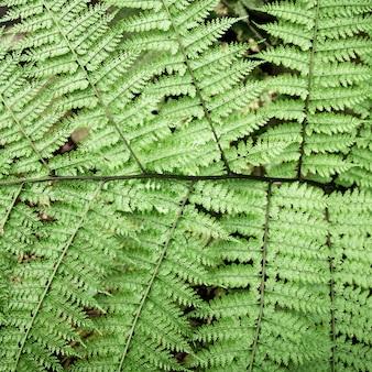 Vue de dessus vert feuilles tropicales