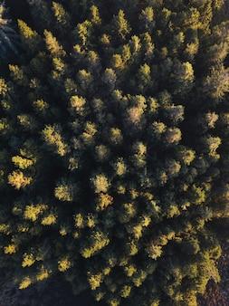 Vue de drone du parc forestier de whinlatter au lake district en angleterre
