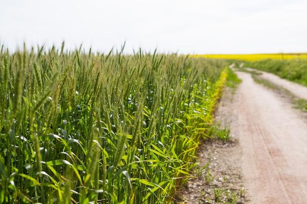 Vue du chemin vide traversant les champs
