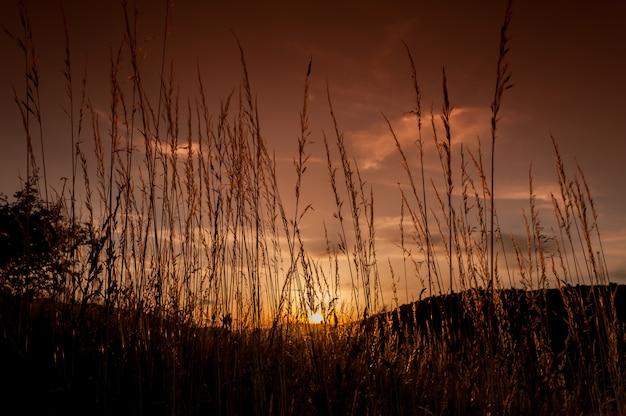 Une vue du ciel orange vu du sol à travers l'herbe