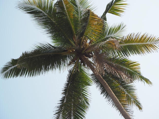 Vue du cocotier de bas en haut. concept de vacances et de lieux tropicaux