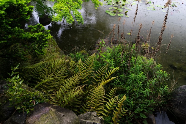 Une vue du jardin verdoyant de tennoji keitakuen