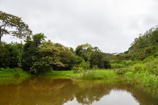 La vue du lac sur l'île d'en face avec des plantes luxuriantes