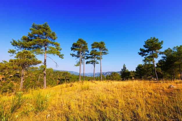 Vue du paysage des montagnes forestières