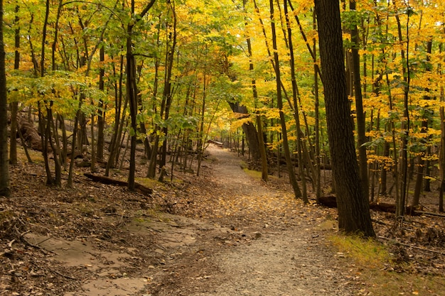 Vue du sentier avec des arbres d'automne dans la forêt