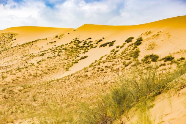 Vue sur les dunes de sable dans le désert