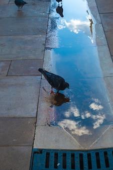 Vue sur l'eau potable des pigeons avec un reflet du ciel.