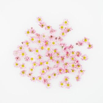 Vue élevée de belles fleurs sur fond blanc