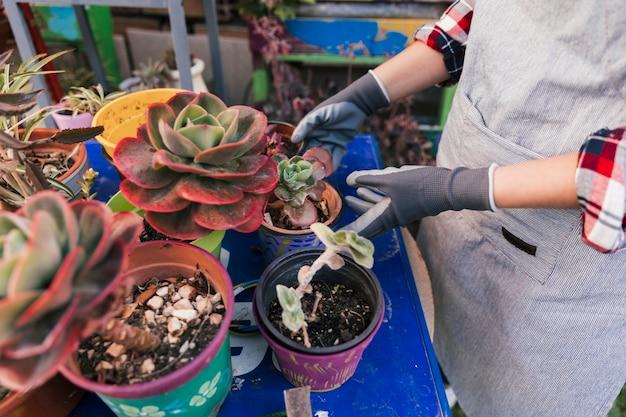 Vue élevée, de, a, femme jardinier, prendre soin de, plante cactus