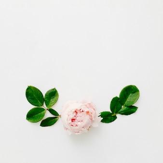 Vue élevée de la fleur de pivoine fraîche et feuilles vertes isolés sur fond blanc